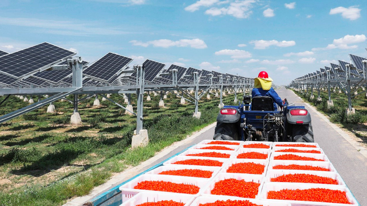Giant agrivoltaic project in China